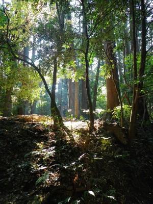 woods-787915_640