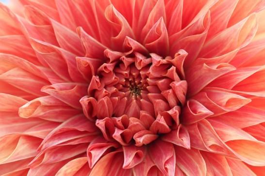 flower-661850_640